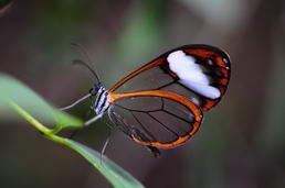 """Le papillon """"ailes de cristal"""""""